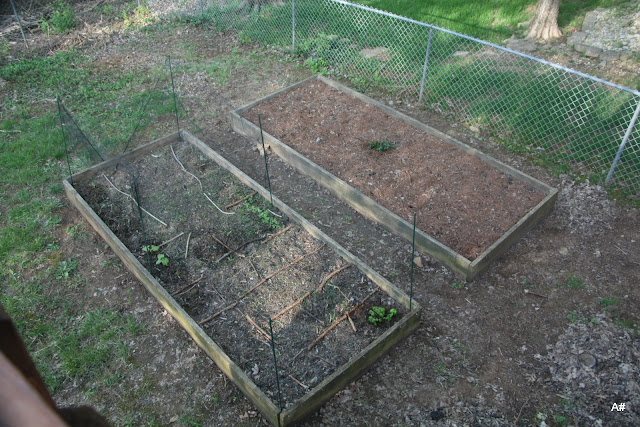 small raised beds planted