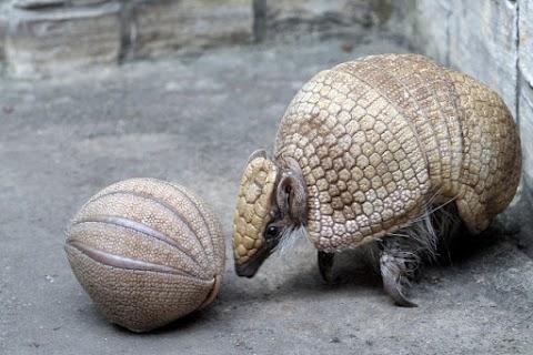 Újszülött matakókölyköt mutattak be a Fővárosi Állat- és Növénykertben
