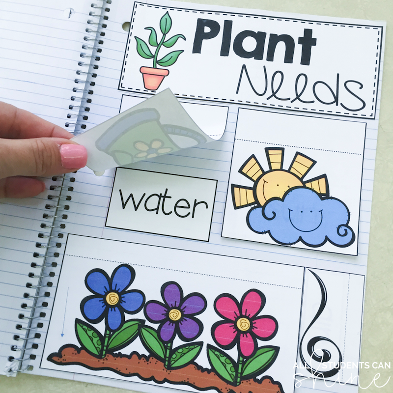 plants interactive notebook freebie