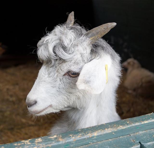 Naturgenuss pur: Der Tierpark Arche Warder. Viele seltene Schaf- und Ziegenarten leben in der Arche Warder.