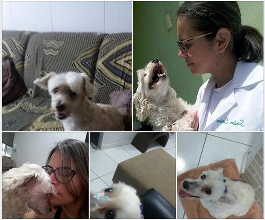 Família procura por cachorrinha desaparecida em Santa Cruz do Capibaribe