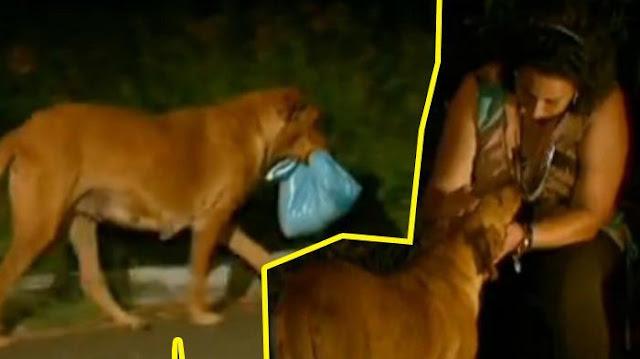 Membawa Kantong Plastik Setiap Hari Anjing Ini, Isinya Bikin Kaget