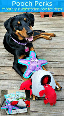 doberman mix rescue dog pooch perks under the sea box