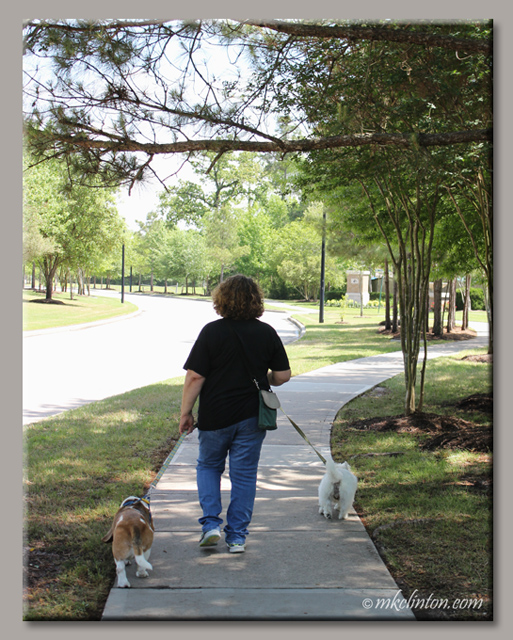 Woman walking away with two dogs