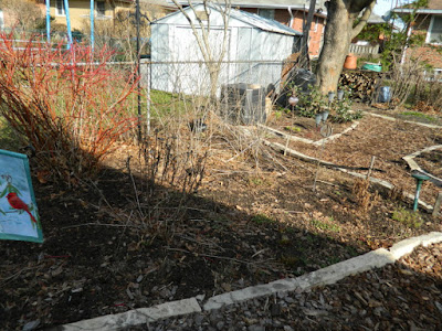 Toronto Etobicoke spring garden cleanup before Paul Jung Gardening Services