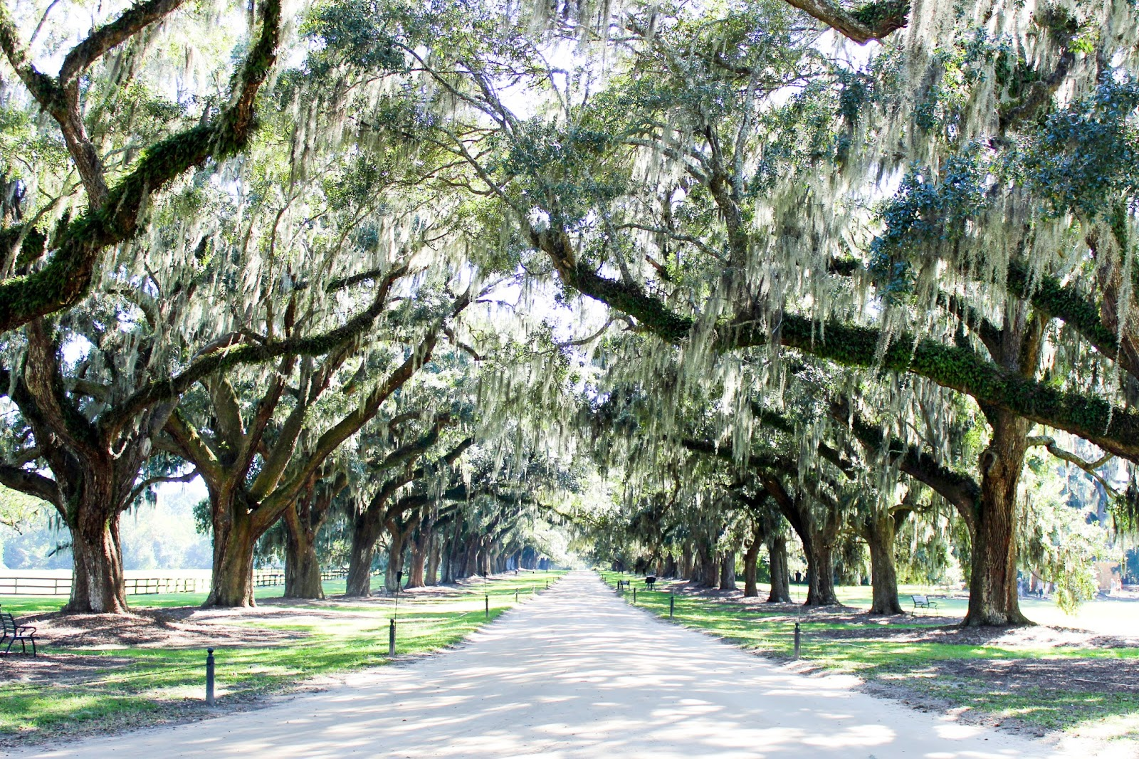 Top Ten Things to Do in Charleston