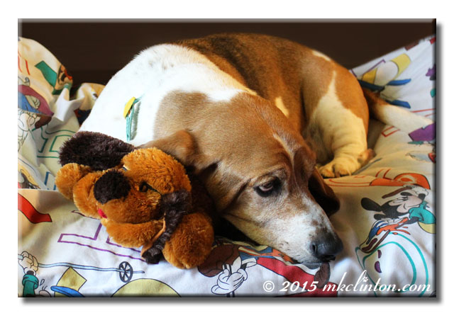Basset Hound with his PetSafeLove Snuggle Puppy