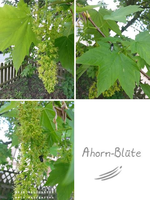 http://mein-waldgarten.blogspot.de/2013/05/ganz-von-allein.html