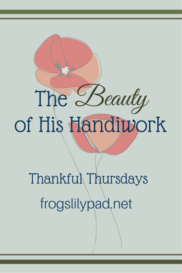 The Beauty of His Handiwork ll frogslilypad.net