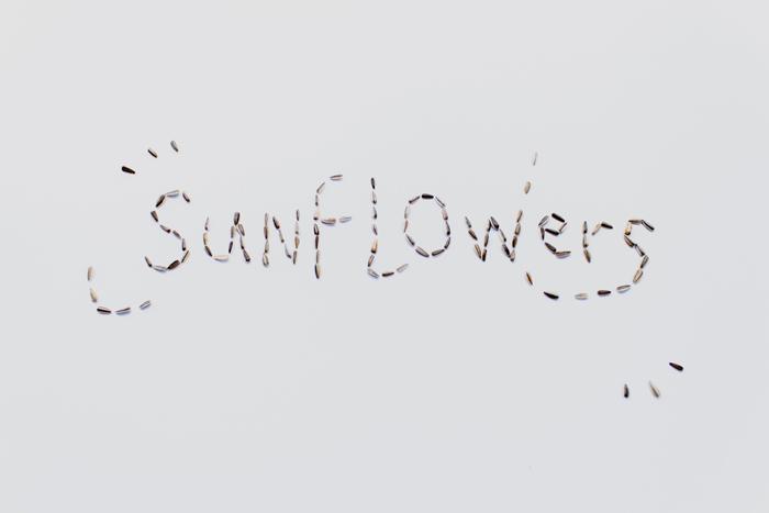flatlay sunflower seeds