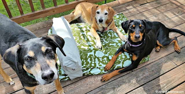 One #MollyMutt bed = Three Happy Dogs! #dogbed #abedoftheirown #rescuedogs #adoptdontshop #HappyDogs #LapdogCreations ©LapdogCreations