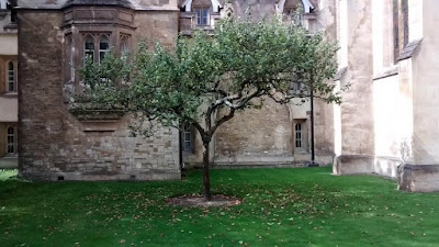 Newton's Apple Tree At University Of Cambridge At Trinity College In UK Travel Blog