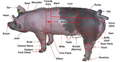 pig, partes do porco, inglês