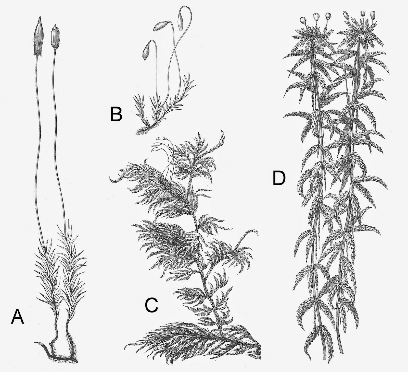 Botany Professor February