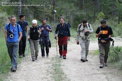 http://www.biodiversidadvirtual.org/insectarium/Testing-Punto-BV-Espacio-Pirineos-Graus-img586928.html