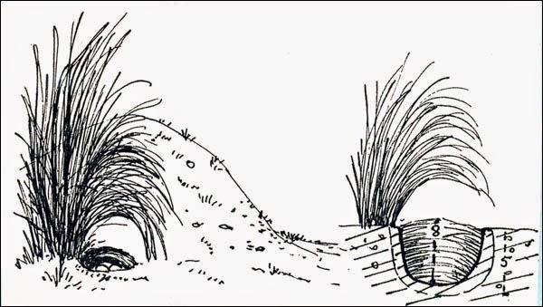 nido de Cachirla