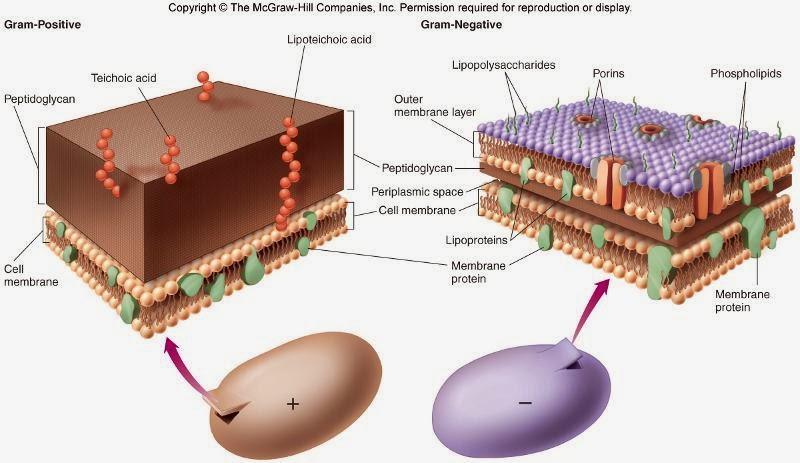 antibiotic pentru amigdalita