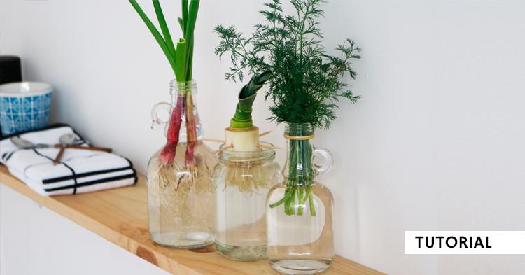 Cómo rebrotar vegetales en agua