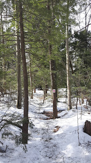 Sentier l'Escapade, mont Rigaud, printemps, neige, arbres