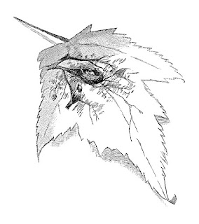 bird leaf clip art pencil drawing artwork digital download
