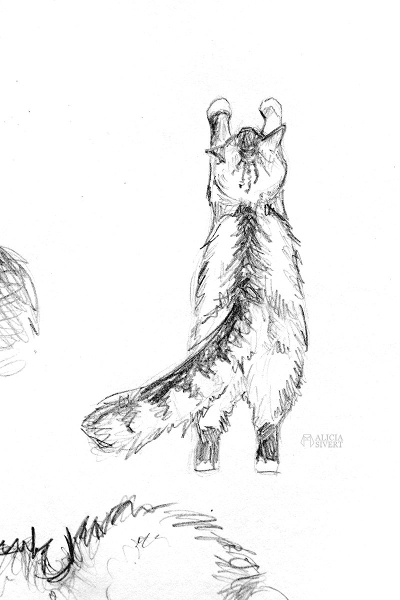 aliciasivert alicia sivert sivertsson konst teckning teckningar skiss skisser rita katt katter katten tofslan illustration skapande