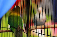 lensalovebird.com
