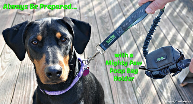 doberman mix rescue dog mighty paw