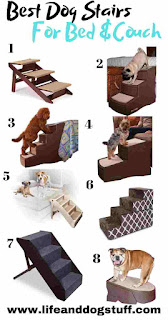 8 Best Dog Steps and Stairs For Bed and Couches