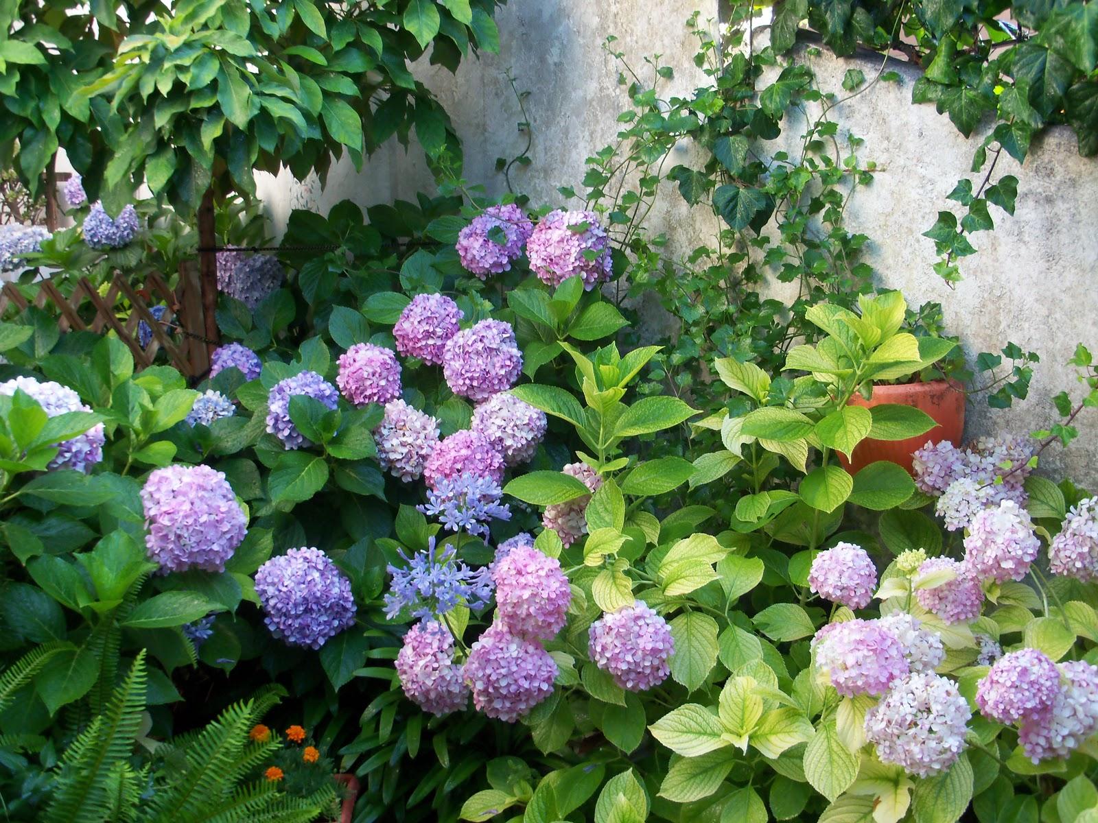 Fantasia tunni il mio giardino fiorito for Alberelli da giardino fioriti