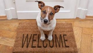 เตรียมบ้านให้หมา