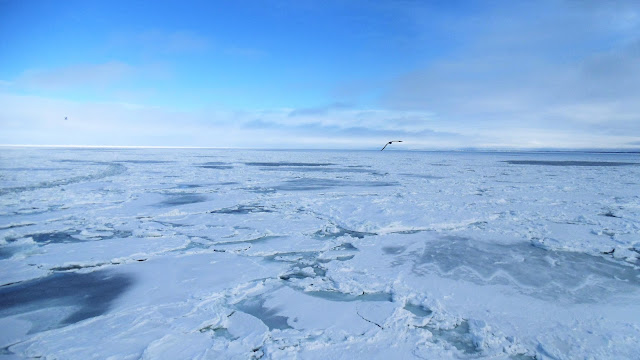 北海道、網走で見た大量の流氷