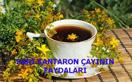 SARI KANTARON ÇAYININ FAYDALARI