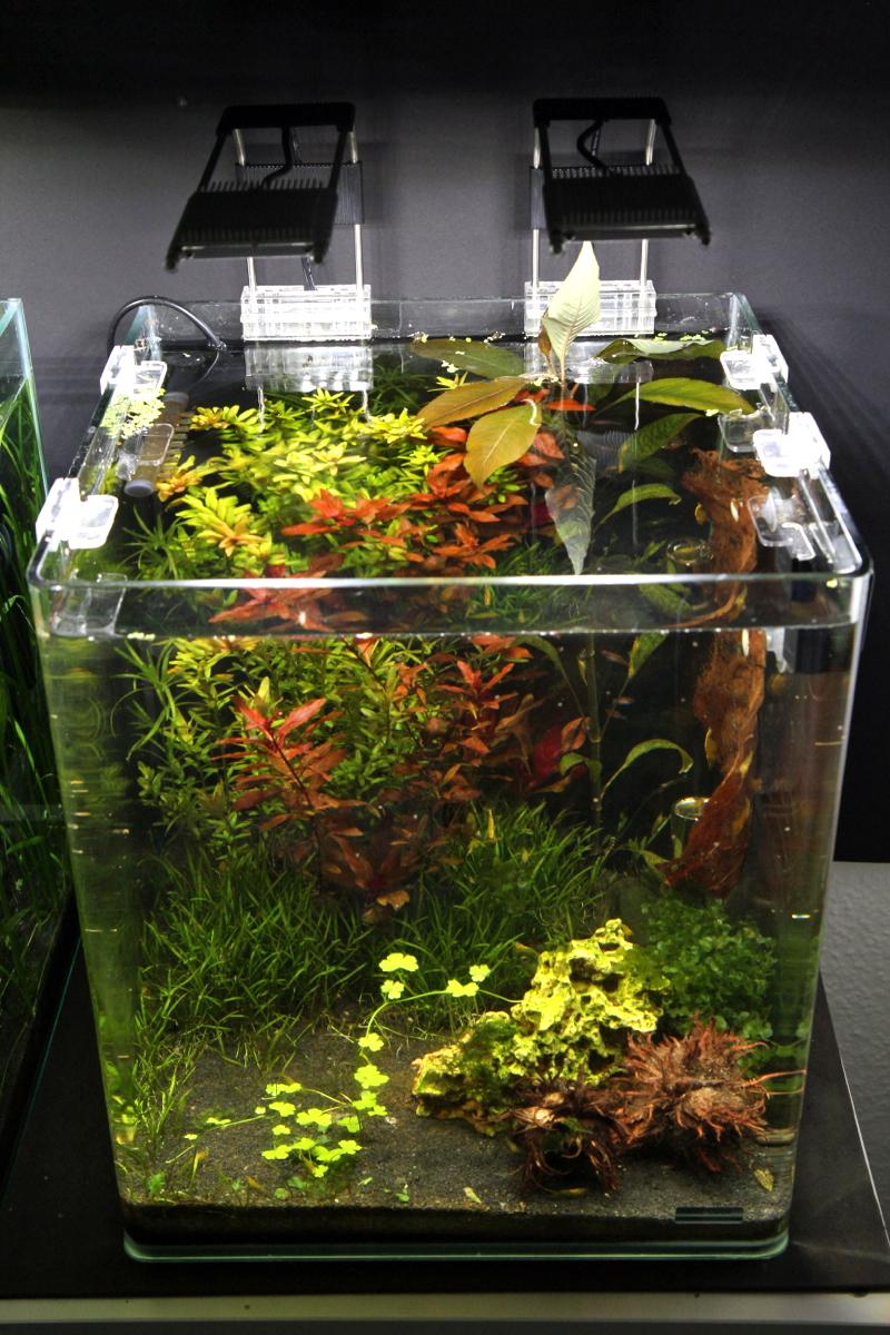 nano aquarium f r anf nger dennerle nanocube complete. Black Bedroom Furniture Sets. Home Design Ideas