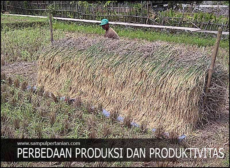 Perbedaan Dan Cara Menghitung Produksi Dan Produktivitas Dalam Pertanian