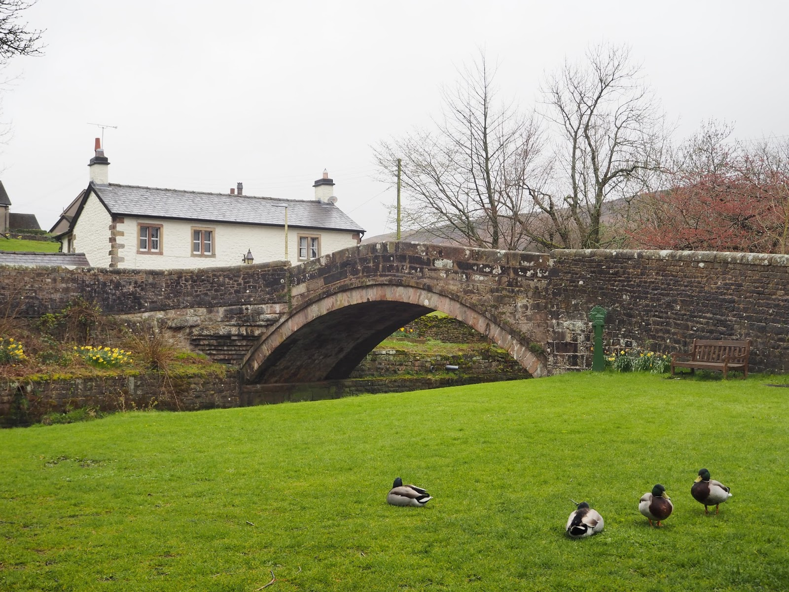 Ducks at Dunsop Bridge