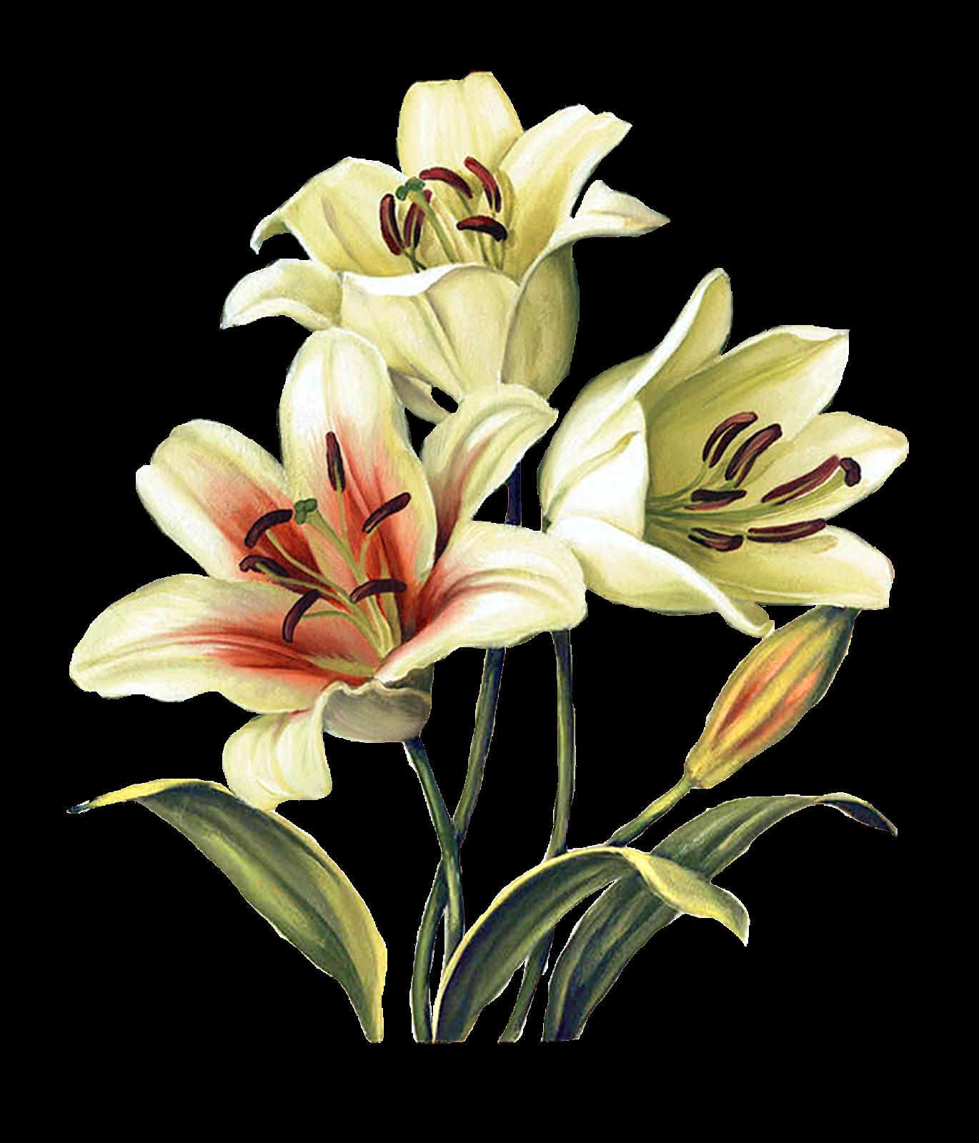 Flower Painting_By Lisa Audit_PNG_(69 item)   Joy Design ...
