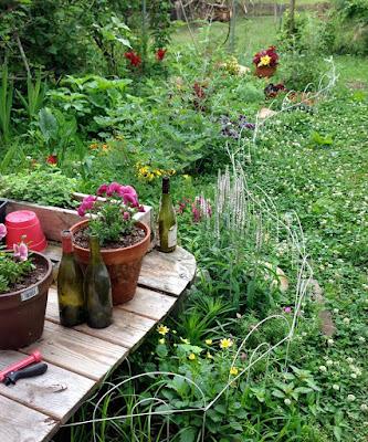 Wild unkempt garden