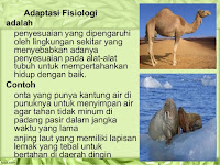 Adaptasi Fisiologi