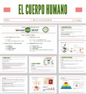 https://prezi.com/taoigsrl-as6/c-naturales-5o-curso-tema-1-el-cuerpo-humano/