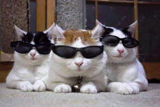 Gambar 3 Kucing Lucu Pakai Kacamata