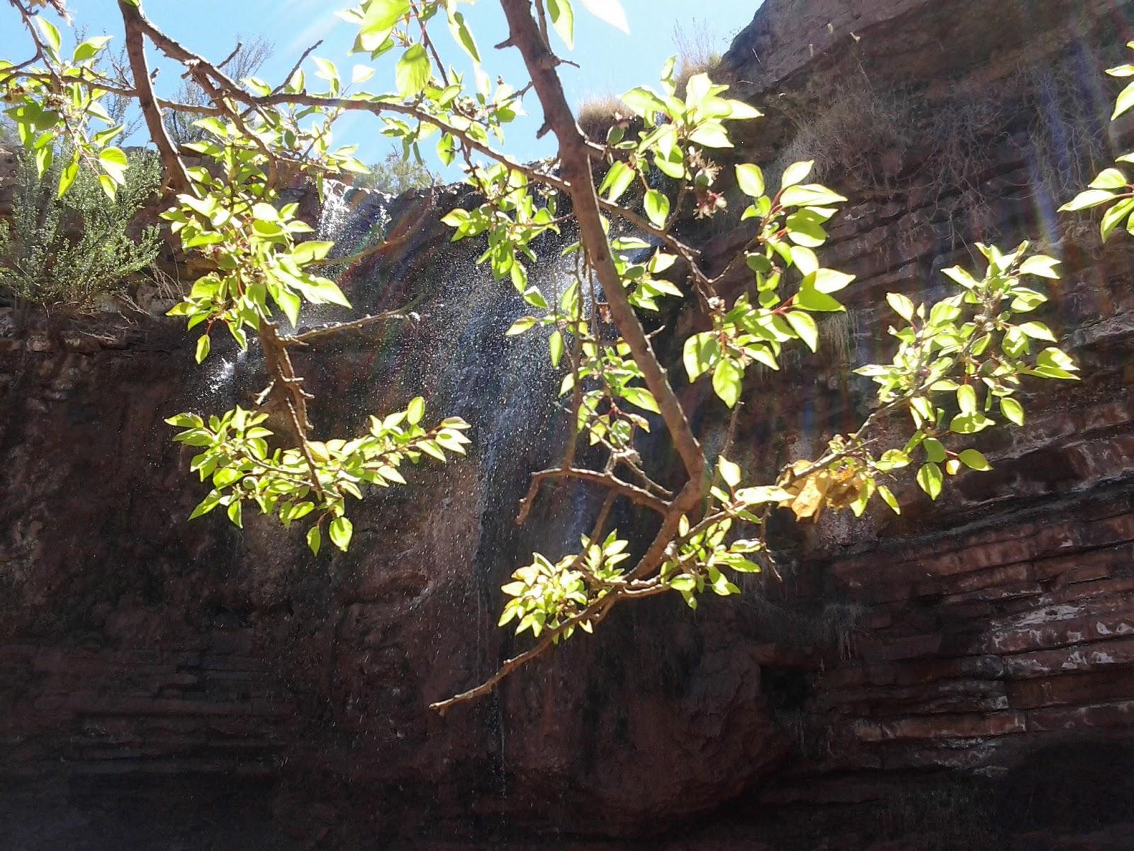 Southern New Mexico Explorer  Bridal Veil Falls Trail