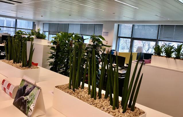 Grote planten kopen op mosstok als scherm of afscheiding gebruiken in Limburg vlaams-brabant  Brussel