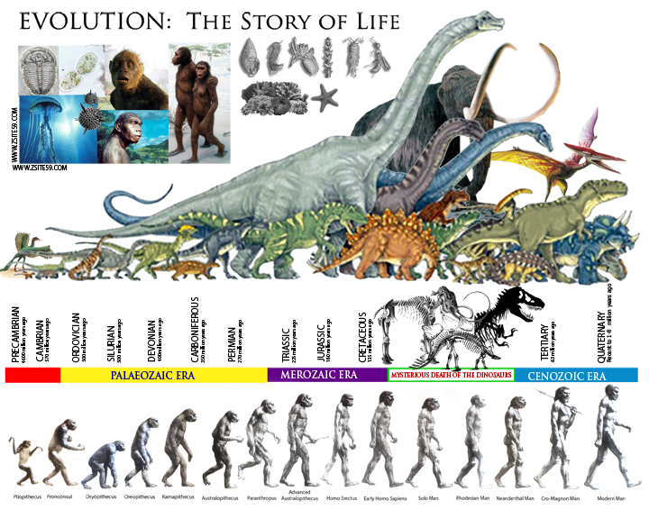 Zsite59 EVOLUTION The Story Of Life The Prehistoric