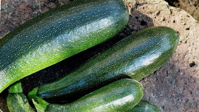 Ridge gourd health benefits.Top 7 various informations.
