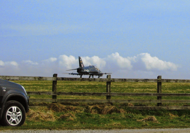 Hawks at RAF Valley, Anglesey
