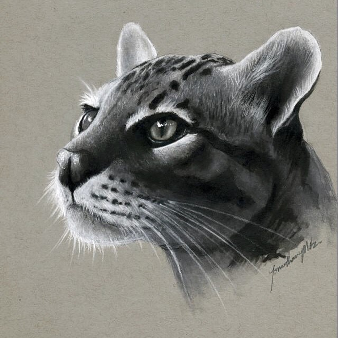 01-Cat-Jonathan-Martinez-Realistic-Pencil-Animal-Drawings-www-designstack-co