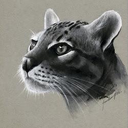 realistic pencil animal drawings animals cat drawing wild cats sketches designstack martinez jonathan tiger cool press enlarge