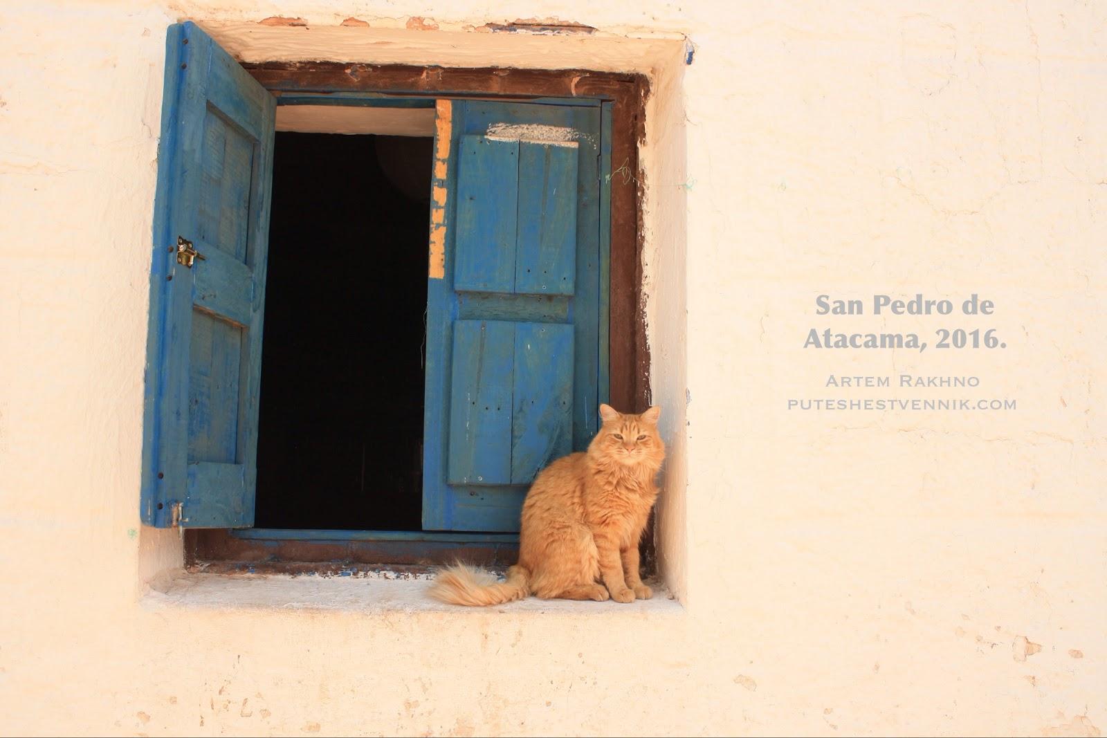 Кот у окна в Сан-Педро-де-Атакама