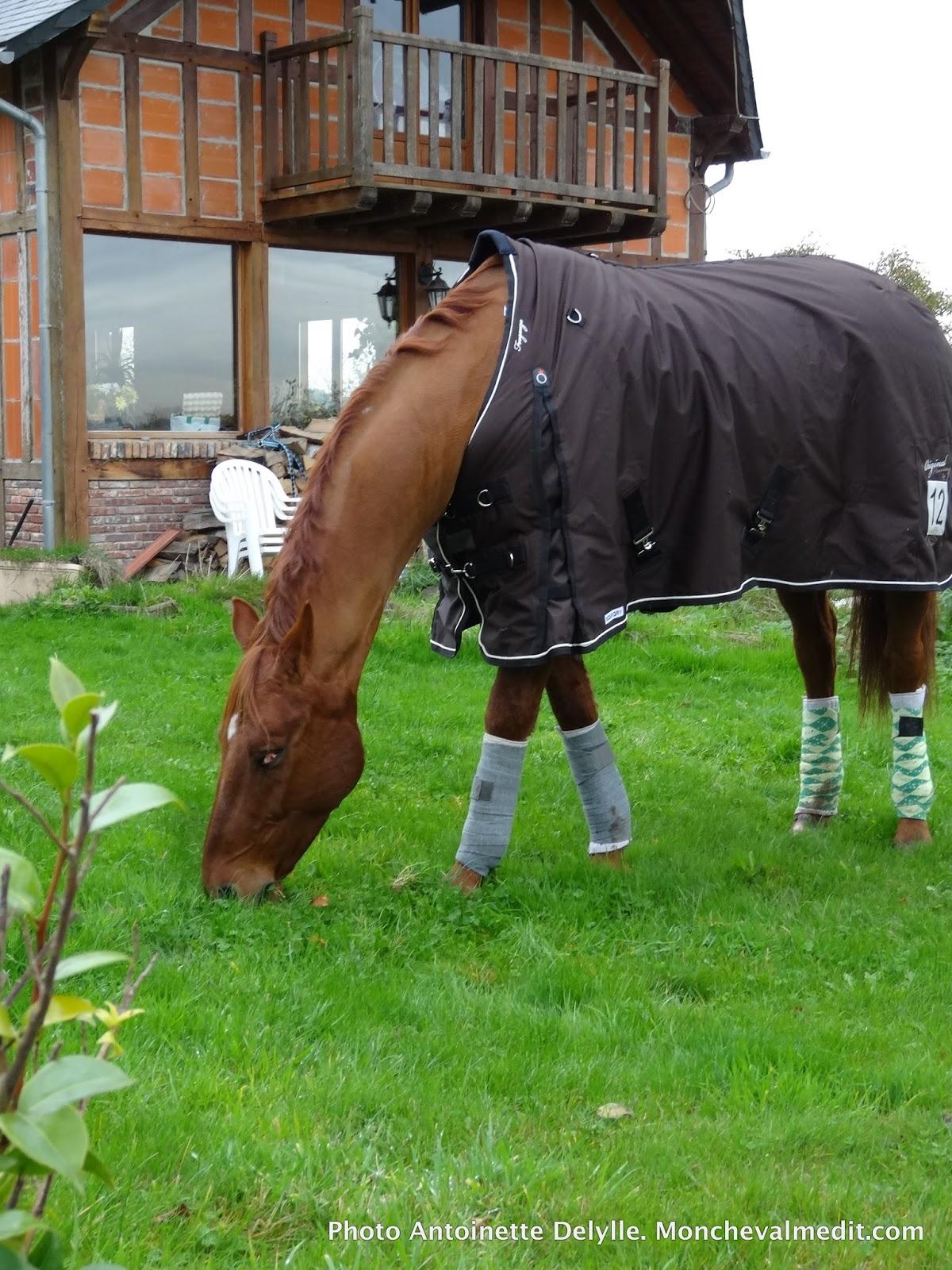 Mon cheval me dit radio cap ferret 97 9 la belle for Bruler dans son jardin