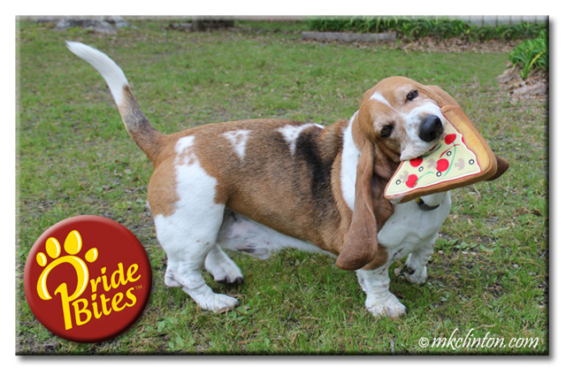 Basset Hound playing with PrideBites pizza